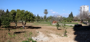 """Portakal ağaçlarını kesip çim ektiler, uydu fotoğraflarıyla tespit edildiler Antalya'da AK Partililerden Narenciye Bahçesi'ndeki ağaç kesimine tepki AK Parti Antalya İl Başkanı İbrahim Ethem Taş: """"Uydu fotoğraflarından bölgedeki ağaçların yerinden söküldüğünü gördük"""" """"Burada ihaleyi alan firmanın ağaçlara bakması ve koruması gerekirken, bazı ağaçların kesildiğini ve zarar veriliğini tespit ettik"""" """"Biz buna siyaset olarak bakmıyoruz, bu siyaset üstü bir meseledir, konunun takipçisi olacağız"""""""