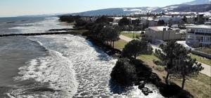 Kıyı erozyonu birçok ağacı kökünden söktü Vatandaşlar yıllardır çözülemeyen soruna çare arıyor