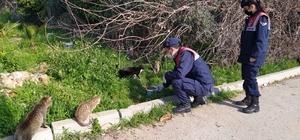 Jandarma ekipleri, kısıtlamada sokak hayvanlarını unutmuyor