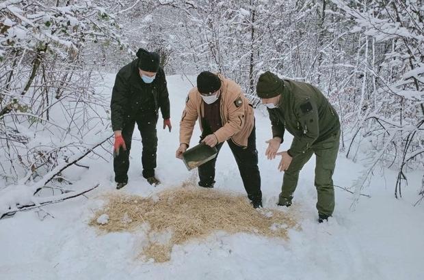 Yaban hayvanları için ormanlık alana yem bırakıldı