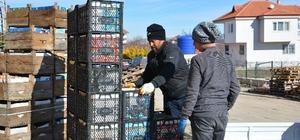 Coğrafi işaretli tonlarca karyağdı armudu alıcı bekliyor Türkiye'nin karyağdı armut ihtiyacının yüzde 60'ının karşılandığı ilçede üreticiler, meyvelerinin zincir market reyonlarına girmesini istiyor