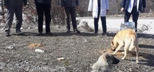 Sokak hayvanları Alanya Belediyesi ile güvende