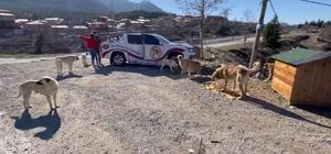 Adanalı kebapçı sokak hayvanlarını unutmadı Kebapçı Uğur Aydın, sokağa çıkma kısıtlamasında ilçeleri gezerek sokak hayvanlarını besliyor
