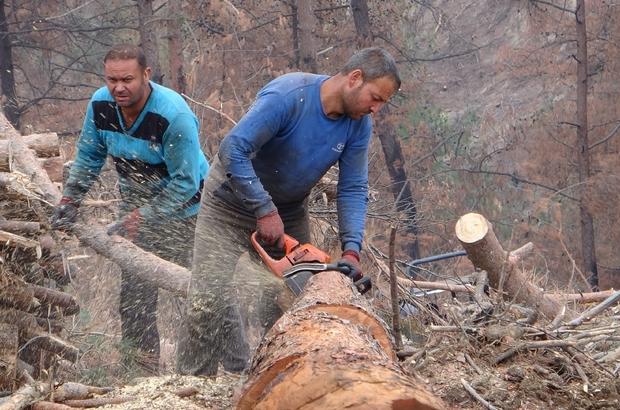 Yanan ormanlık alanları küllerinden yeşertmek için çalışıyorlar Adana'da yanan ormanlık alanı yeşertmek için evlerinden kilometrelerce uzakta çocukları çadırda yaşayan orman işçileri, bin 800 hektar alanın yeniden yeşertilmesi için çalışıyor Orman Mühendisleri Odası Doğu Akdeniz Şube Başkanı ve Kozan Orman İşletme Müdürü Şensu Küçükateş, yaşam kalmayan alanda yeniden ekosistemin oluşmasının uzun yıllar alacağını belirtti