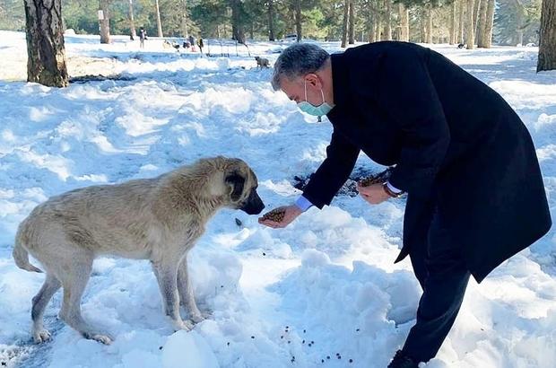 Milletvekili Dr. Mustafa Canbey, Can Dostlar Yaşasın projesine destek olarak, vahşi yaşam alanındaki hayvanları besledi