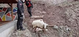 Edremit'te itfaiyenin kuzu kurtarma operasyonu