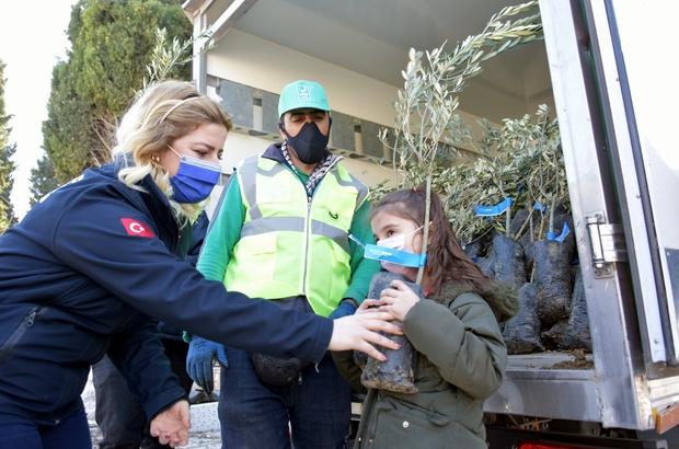 Aliağa Belediyesinin zeytin fidanı dağıtımları sürüyor 3 günde 4 bine yakın zeytin fidanı dağıtıldı