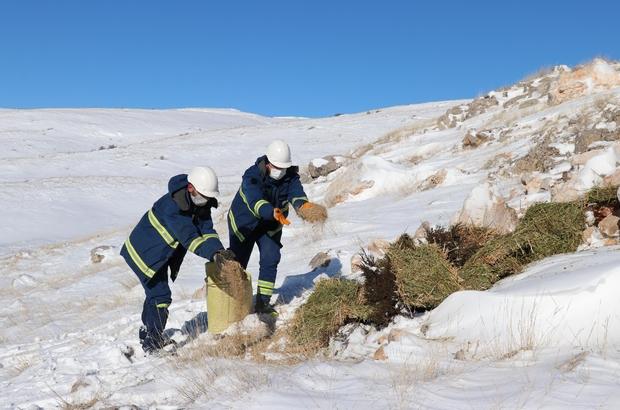 Hem arıza giderdiler hem de yabani hayvanları doyurdular Sivas'ta ÇEDAŞ'ın enerji timleri, zorlu kış şartlarında elektrik arızalarına müdahale ederken olumsuz hava şartları nedeniyle doğada yiyecek bulmakta zorlanan yaban hayvanlarına da enerji oldular