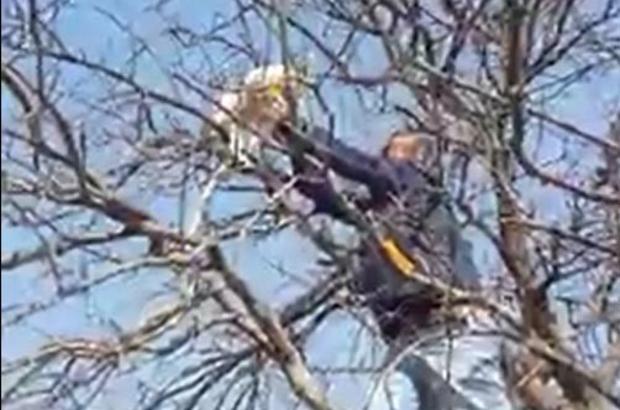 Çıktığı ağaçta mahsur kalan kediyi vatandaşlar kurtardı