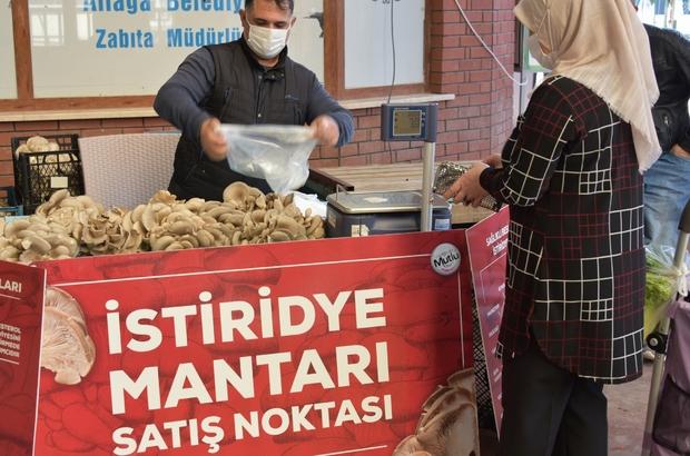 Aliağa'da istiridye mantarlarının ilk mahsulleri satışa sunuldu