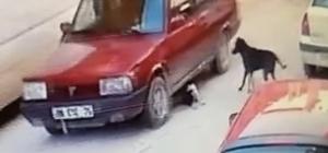 Yavru köpeği ezme anı kamerada Yavru köpeği ezmenin cezası 1000 lira