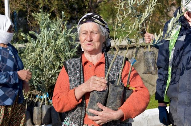 Aliağa'da zeytin şöleni sürüyor Aliağa Belediyesi 1 haftada 8 bin 500 adet zeytin fidanı dağıttı Aliağa Belediyesi üreticinin yanında