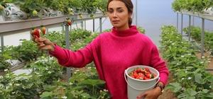 """Girişimci kadın topraksız tarımla çilek üretti Üretici Merve Başak, topraksız tarımla çilek üretip ihracat yapıyor Başak: """"Adana'da hiç beklemediğimiz verimi gördük"""" """"Pandemi fiyatlarımızı düşürdü"""""""