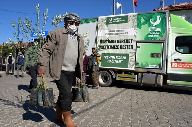 Aliağa Belediyesinin üreticiye destek projesi sürüyor Zeytin fidanları üreticiyle buluştu 10 günde 14 bin 500 adet zeytin fidanı dağıtıldı