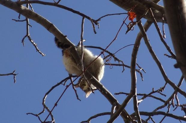 Köpeklerden korkup ağaca çıkan kediyi itfaiye kurtardı Bir gün boyunca ağaçta kalan kedi sırık yardımı ile kurtarıldı