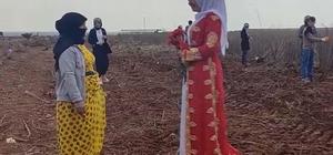Şanlıurfa'da tarlada çalışan kadınlara 8 Mart sürprizi