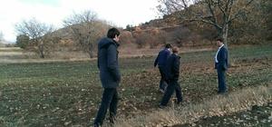 Organik siyez buğdayına talep artınca, üretim alanı genişletilmeye başlandı