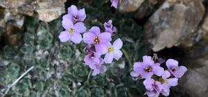 Erzincan 500 dolayında endemik bitkiye ev sahipliği yapıyor