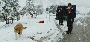 Kar nedeniyle yol kapanınca hayvanların imdadına jandarma yetişti