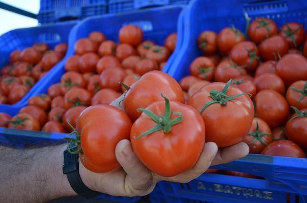 Muğla'da domates üreticisi kotanın kaldırılmasını istiyor