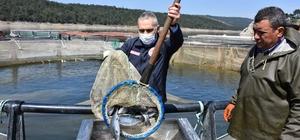 Denizi olmayan Manisa'da su ürünlerinden önemli gelir Manisa Tarım ve Orman İl Müdürü Metin Öztürk Soma'daki su ürünleri işletmesinde incelemede bulundu