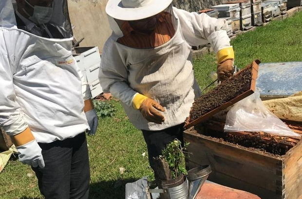 Tekirdağ'da arı kovanları bakımdan geçiyor