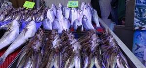 Balık av sezonunda sona doğru Av mevsiminin bitimine yakın deniz balıklarının fiyatları artarken, balıkçı esnafı yüksek fiyatlardan şikâyetçi