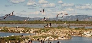 İzmir'in Gediz Deltasında Kuş Göçü İzleme Programı başladı