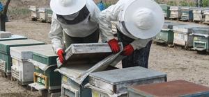Manyas'ta arılar zehirli kimyasal atık su yüzünden telef oldu Arıcı kardeşler haklarını mahkemede arıyor
