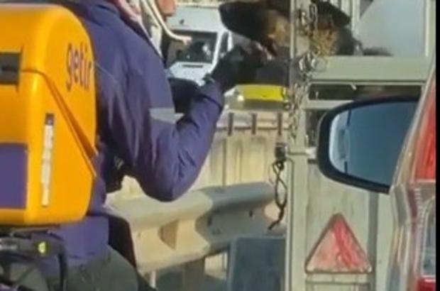 Antalya'da trafikte kurye ile köpek arasında yürek ısıtan görüntü Trafik ışıklarında römorkta bekleyen köpeği uzun uzun sevdi