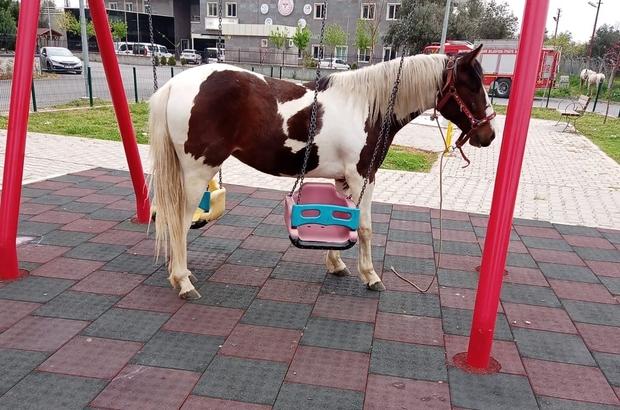 Salıncaklara dolanan atı görenler büyük şaşkınlık yaşadı