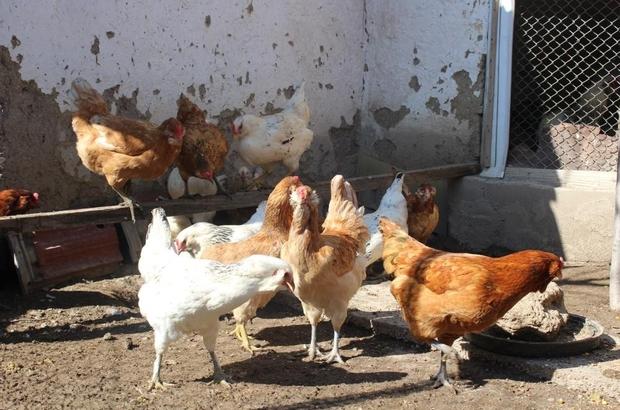 3.2 milyon kanatlı hayvan diğer şehirlere sevk edildi