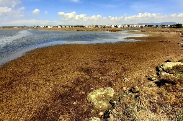 Ayvalık'ta Karakoç Deresi'nin sulak alan statüsü korunacak Sulak Alan Komisyonu'ndan Ayvalık'ı sevindiren haber