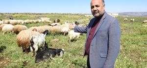 """Bitcoine yatırım yapanlara bir koyun çağrısı Koyun Yetiştiricileri Birliği Başkanı Türkmen: """"Bitcoine değil bir koyuna yatırım yapın"""""""