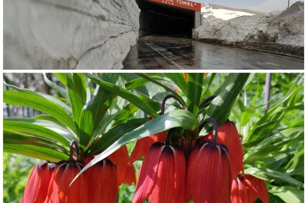 Van'da iki mevsim bir arada Yüksek kesimlerde metrelerce kar kütleleri, şehir merkezinde ise rengarenk çiçekler