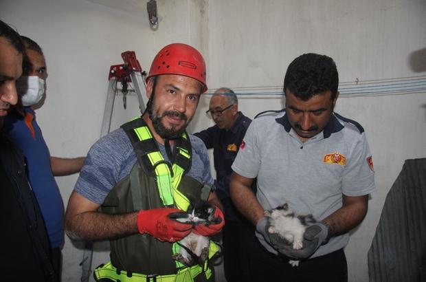 Su kuyusuna düşen 2 yavru kedi kurtarıldı