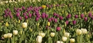 Gediz Adnan Menderes Yaşam Parkı lalelerle bir başka güzel