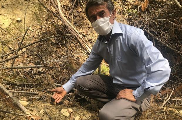"""Yanan ormandan """"kuzugöbeği"""" fışkırdı Adana'da geçen yıl 2 bin 675 hektar alanın yanarak zarar gördüğü ormanlık alanda kilosu 400 liradan kurutulmuşu 2 bin liradan satılan kuzu göbeği mantarı fışkırdı Kozan Orman İşletme Müdürlüğü, yanan alanda ekilen tohumların yeşermesi için mantarların toplatılmasına izin vermedi"""