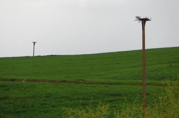 Leyleklere telefon direklerinden yuva Adana'da, leyleklerin elektrik direklerinde akıma kapılarak telef olmalarının öne geçmek için atıl durumdaki telefon direkleri yuvaya dönüştürüldü