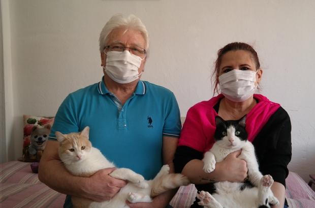 """Bu otelde kediler çok rahat Evini kedi oteline çevirdi, hem mutlu hem para kazanıyor Kedi oteli sahibi Metin Çakır: """"Kendi dairemizi kediler için dizayn ettik"""""""