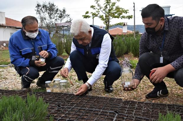Yerel tohumlar toprakla buluştu Muğla Büyükşehir Belediye Başkanı Dr. Osman Gürün, 2022 yılında dağıtımı yapılacak yerel tohumların dikimini gerçekleştirdi.