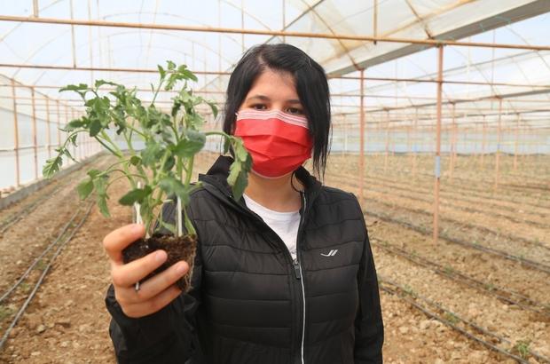 """3 milyon domates fidesi toprakla buluşuyor Çameli Belediye Başkanı Arslan; """"Ürettiğimiz domatesleri Yurtdışına kadar gönderiyoruz"""""""
