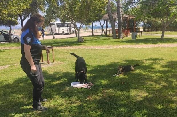 Kumluca'da polislerden sokak hayvanlarına su ve mama desteği
