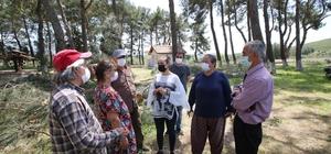 Selçuk'ta ağaçların kesilmesini belediye başkanı durdurdu Selçuk Belediyesi Başkanı ağaç katliamına engel oldu
