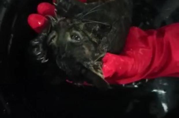 Kurtarılan yavru kediyi, berber dükkanında saç kurutma makinesiyle kuruttular