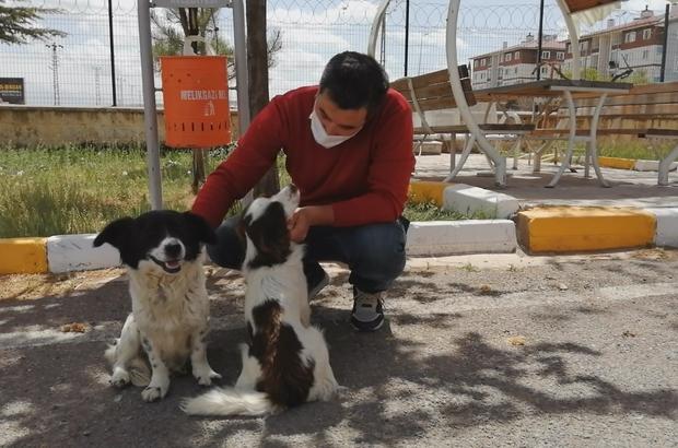 Emniyet personeli iki sokak köpeğini ezilmekten kurtardı
