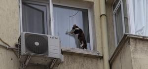 (Özel) İzmir'de görme engelli kediye nefes kesen kurtarma operasyonu Görme engelli kedi, 5. katın penceresinde mahsur kaldı Talihsiz kedi, tellere tutunarak hayatta kaldı