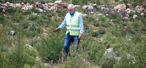 (Özel) Fidanların dedesi 39 yıldır İzmir ormanlarını ağaçla buluşturuyor