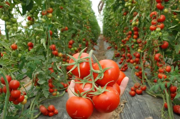 Mersin ve Adana'nın nisan enflasyonu yüzde 16,80; zam şampiyonu domates