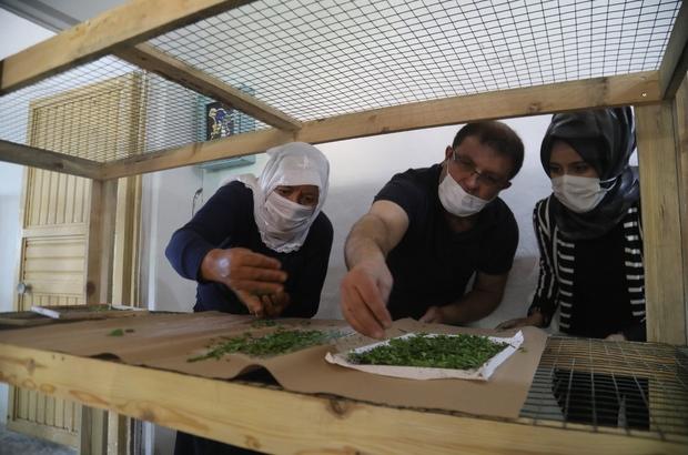 İpekböcekçiliği için çiftçiye tam destek